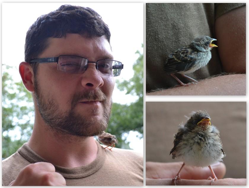 Shane bird